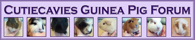 Guinea Pigs - Cutiecavies Guinea Pig Forum
